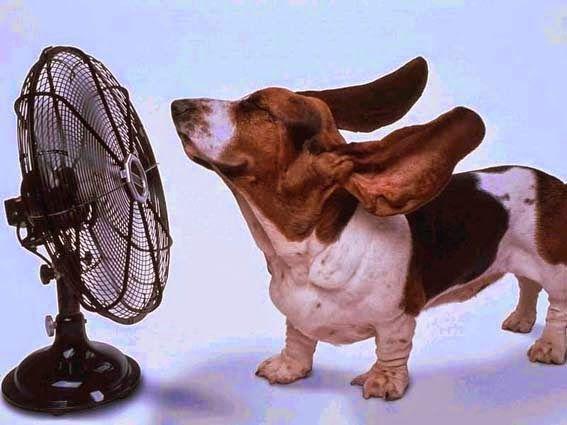 , Consejos para combatir el calor