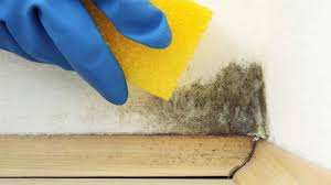¿Cómo eliminar el moho y las manchas de humedad?