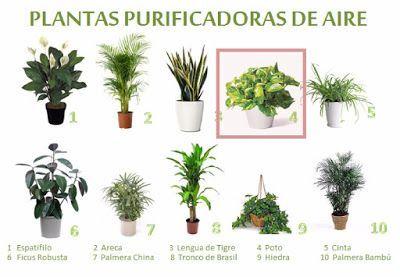 , Plantas para combatir el calor