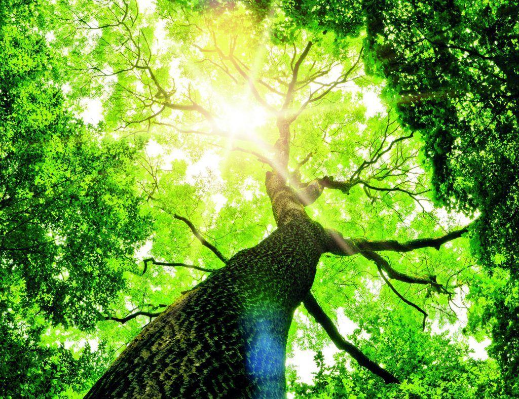 Imagen https://www.ursa.es/faq/que-es-la-declaracion-ambiental-de-producto-dap/